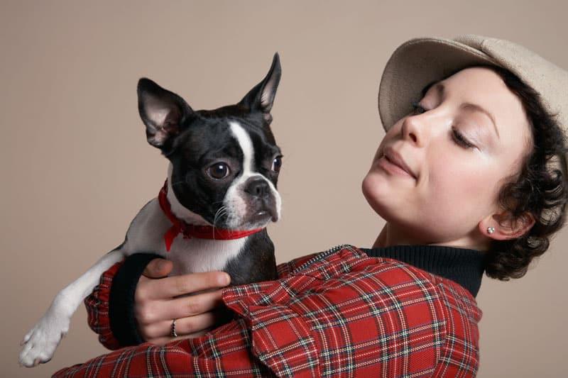 En fransk bulldog har et meget særpræget udseende, der er yderst genkendeligt