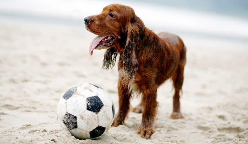 En bold kan være sjov for både hund og menneske