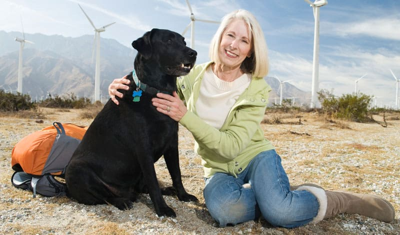 En labrador er en meget populær hund herhjemme