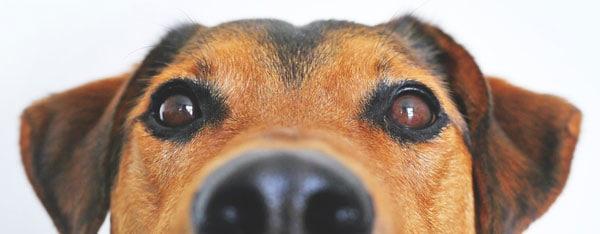 5 ting du skal holde din hund beskyttet mod