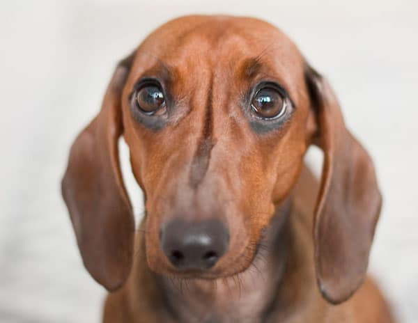 Undgå at din hund fryser - få en varmepumpe