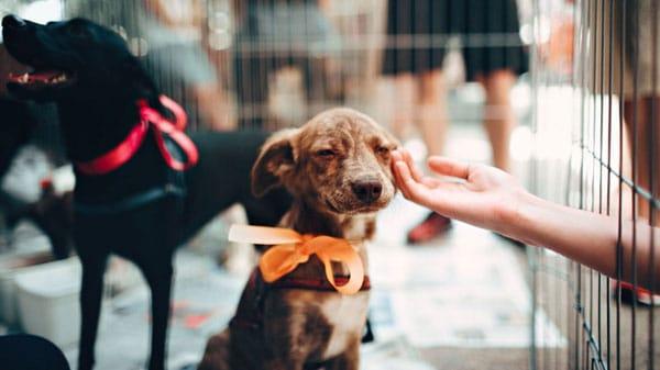 Har du købt det bedste og mest sikre hundebur?