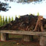 Pas på med en thuja hæk – Den kan være giftig for din hund