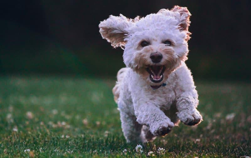 Invester i det bedste til din hund