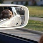 Del flere minder med din hund